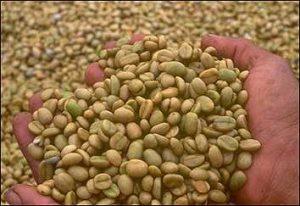 granos-cafe-verde-sin-tostar-propiedades-beneficiosas