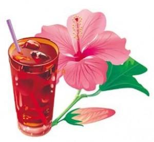 hibiscus carcade